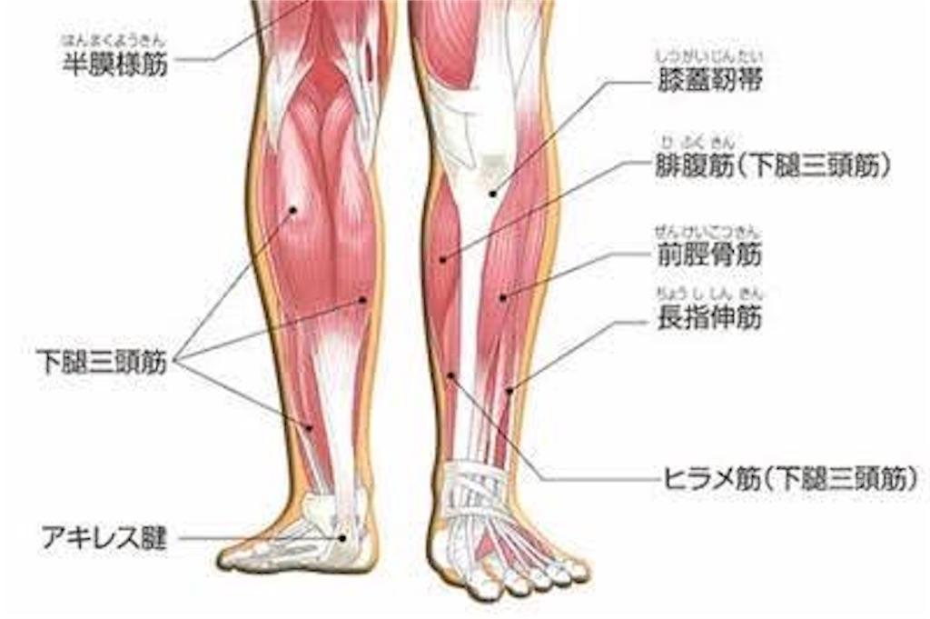 下腿三頭筋について - kaito8911のブログ