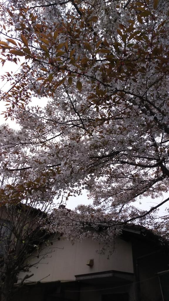 f:id:kaitokunaobakun:20170405171906j:plain