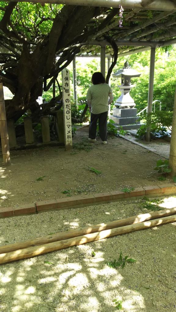 f:id:kaitokunaobakun:20170505223034j:plain