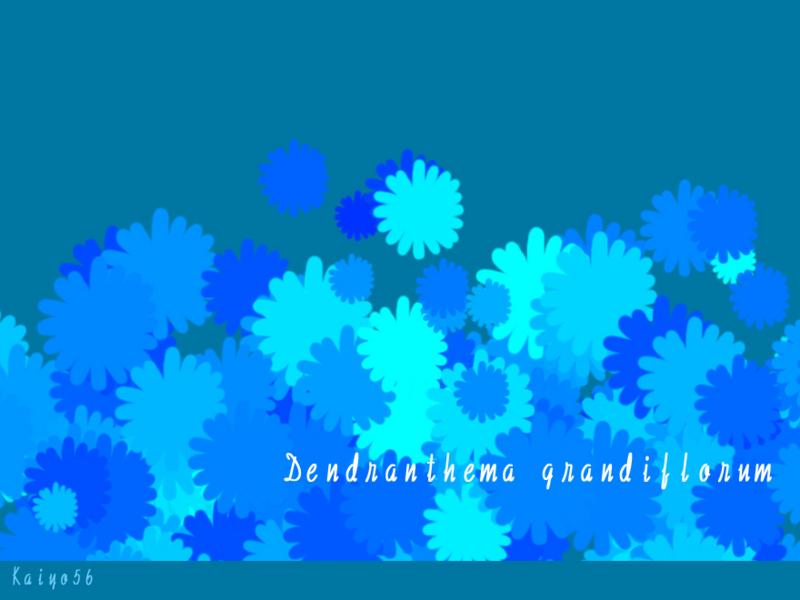 菊花・ブルー