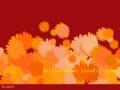 菊花・オレンジ