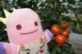 まっかなトマト!