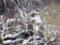 ウミウのコロニー