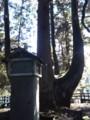 天然記念物『将軍杉』2(新潟県東蒲原郡阿賀町岩谷)