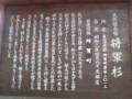 天然記念物『将軍杉』の説明(新潟県東蒲原郡阿賀町岩谷)