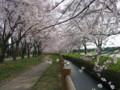 加治川治水記念公園の桜_20090412-01