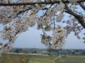 加治川堤の桜_20090412-01