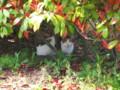 東公園の猫20090418(新潟市中央区明石1)