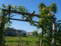 お杉ばら園(新潟市西蒲区石瀬)より岩室温泉方向を望む