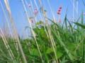 水と土の芸術祭2009-RIVERINE04(江南区小杉・阿賀野川左岸)