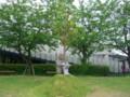 水と土の芸術祭2009-THE HEART OF TREES04(信濃川やすらぎ提)