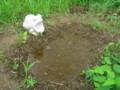 水と土の芸術祭2009-岬(南区鷲ノ木新田)01