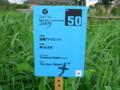 水と土の芸術祭2009-岬(南区鷲ノ木新田)看板