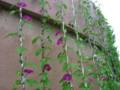 水と土の芸術祭2009-明後日朝顔 NIIGATA 2009(江南区)02