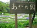 あやめまつり(新発田市・五十公野公園あやめ園)0704-02