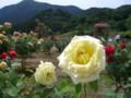 お杉ばら園(新潟市西蒲区石瀬)201106-01