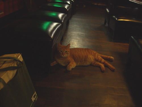 新潟市中央区・ジャズ喫茶スワンの猫(2011.07)