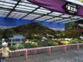 弥彦神社菊まつり2011(西蒲原郡弥彦村)02