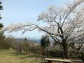 美山公園(糸魚川市大字大野)2016年04月