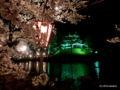 高田公園の夜桜(上越市本城町44-1)2016年04月