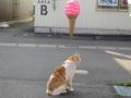 新潟の猫達2016[ピアBandai(新潟市中央区万代島)]