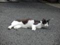 新潟駅前・路地裏「ネコ探訪」。2016.06.15