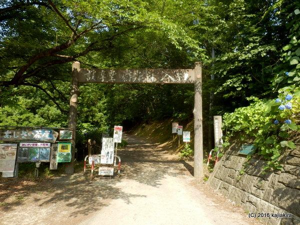 護摩堂山「あじさい茶屋」店主とあじさい談義2016(6/23)