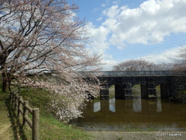 加治川治水記念公園の桜2017(新発田市大字真野原外)