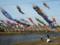 加茂市・加茂川を泳ぐ鯉のぼり2017