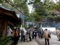 弥彦神社へ参拝(神社仏閣巡り2018、その3)