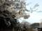 弥彦公園の桜と「農産物直売所やひこ」2018