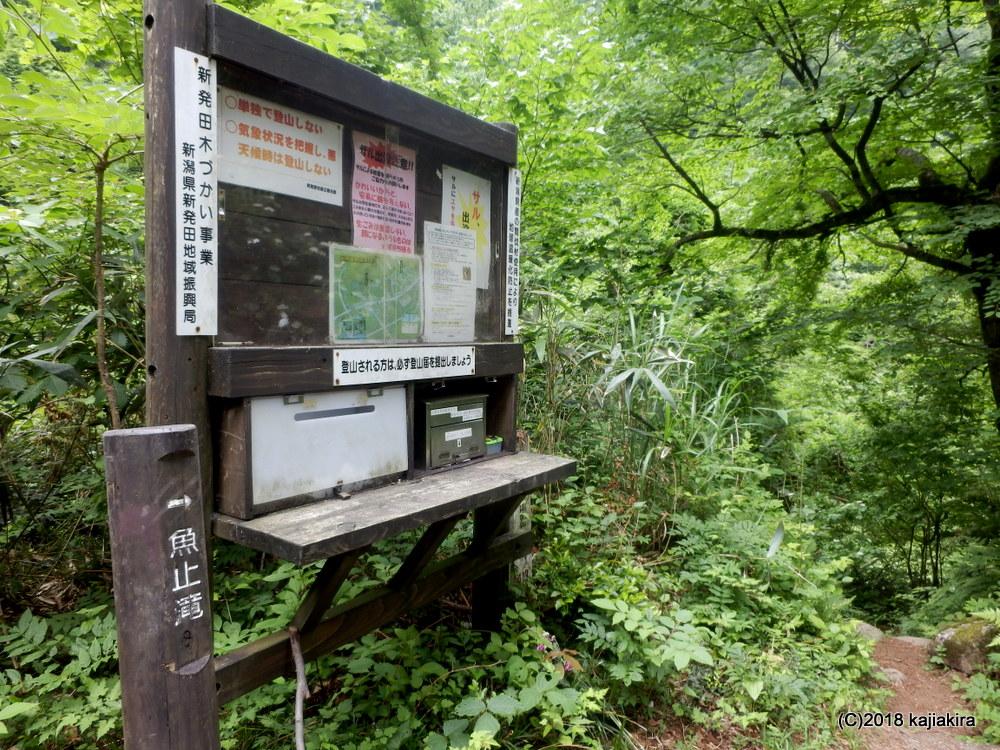 五頭山頂近く、小倉沢から注ぐ魚止の滝(阿賀野市勝屋)へ