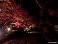 幻想的だった弥彦公園・もみじ谷ライトアップ2018