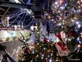 新潟県立植物園・開園20周年記念「温室入館無料デー」と「クリスマス