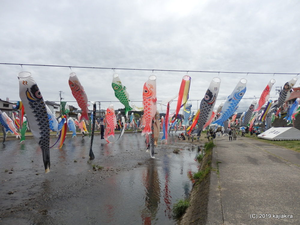 加茂川を泳ぐ鯉のぼり(加茂市)2019