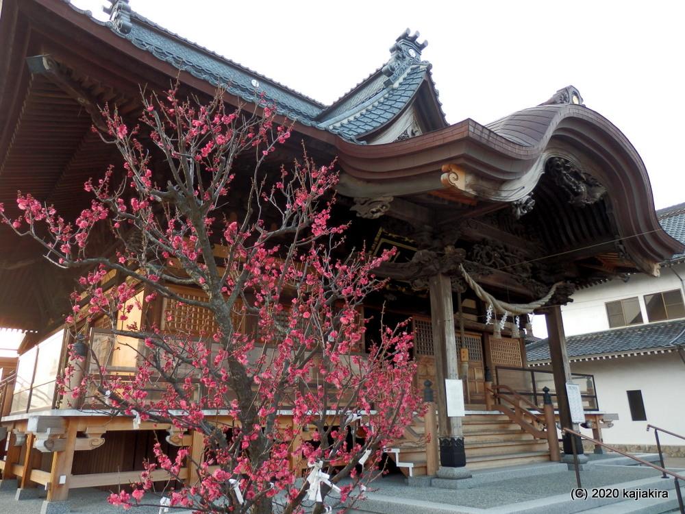 沼垂白山神社-酒粕詰め放題[今代司酒造(新潟市中央区)]に行ってきた。