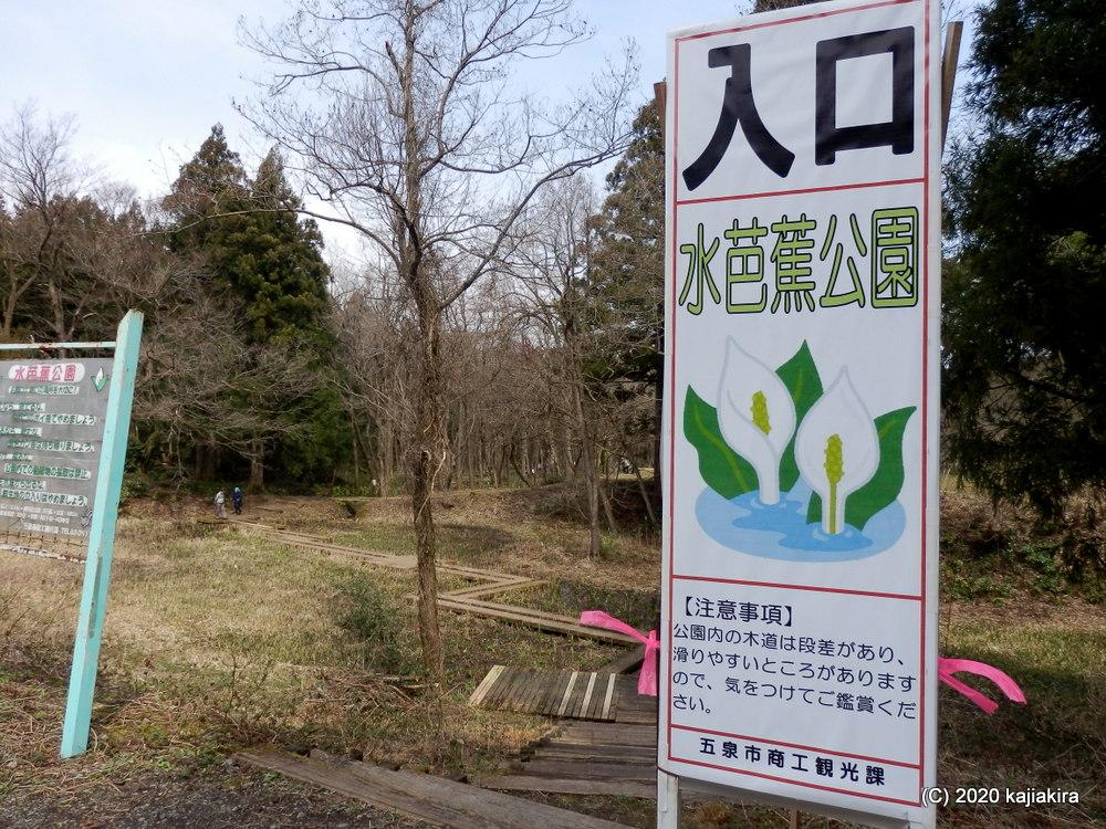 五泉市菅出の水芭蕉公園2020(3/21)