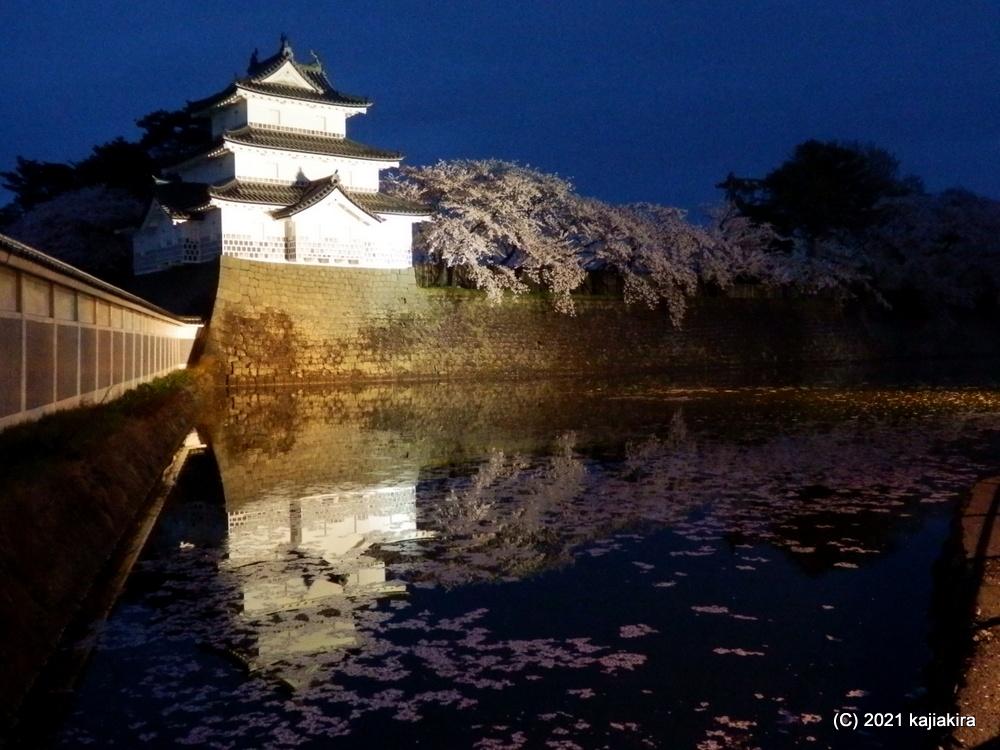 新発田城址公園の夜桜(新発田市) 2021(4/4)