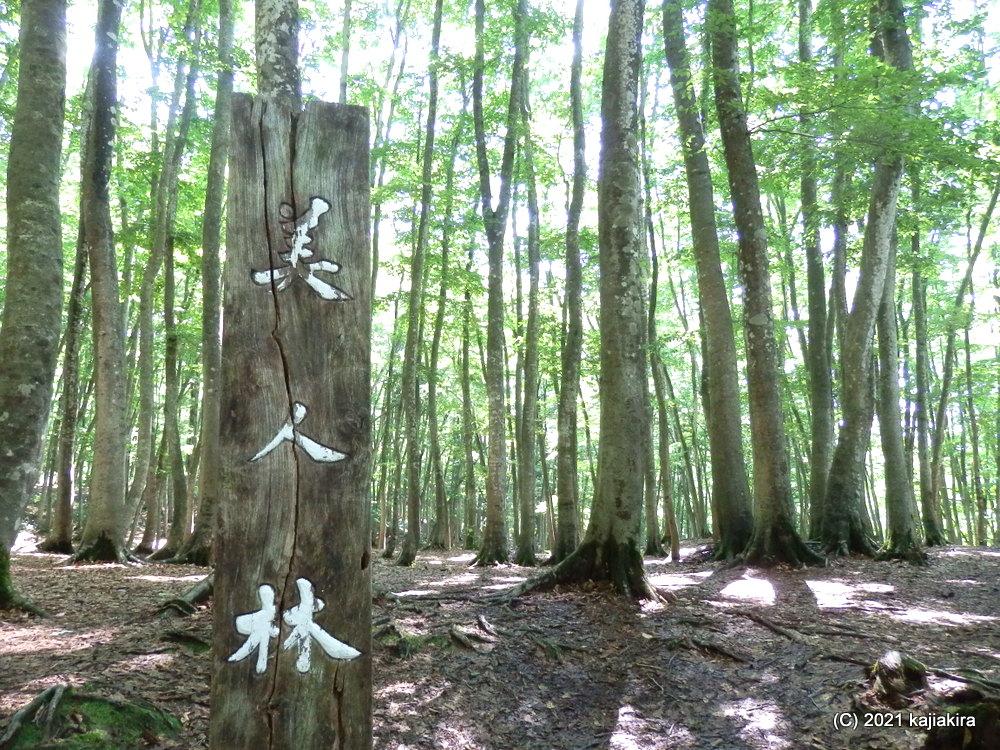 妖精さんが飛び交う気配するパワースポット、美人林(十日町市松之山松口)