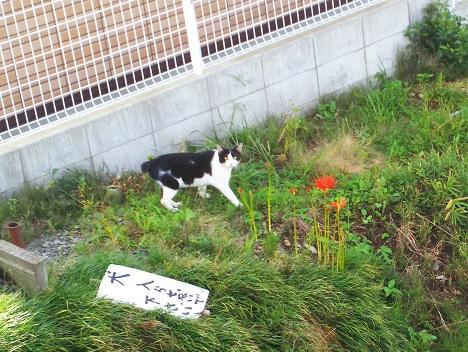 f:id:kajika-fufu:20180921221835j:plain