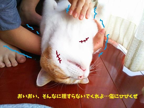 f:id:kajika-fufu:20190815090426j:plain