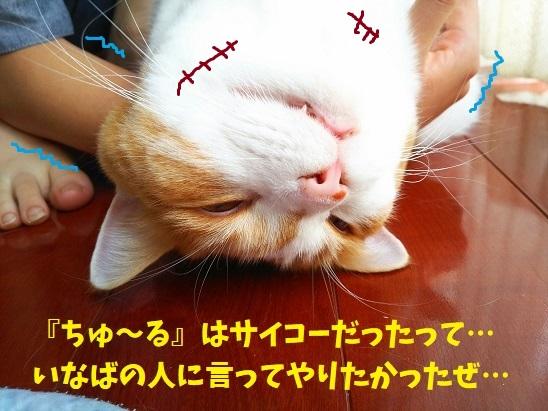 f:id:kajika-fufu:20190815091301j:plain