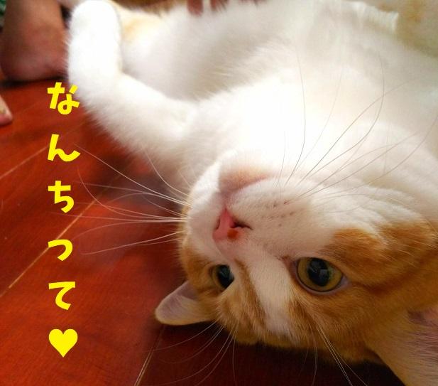 f:id:kajika-fufu:20190815092041j:plain