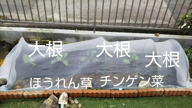f:id:kajiko36:20181102050319j:image