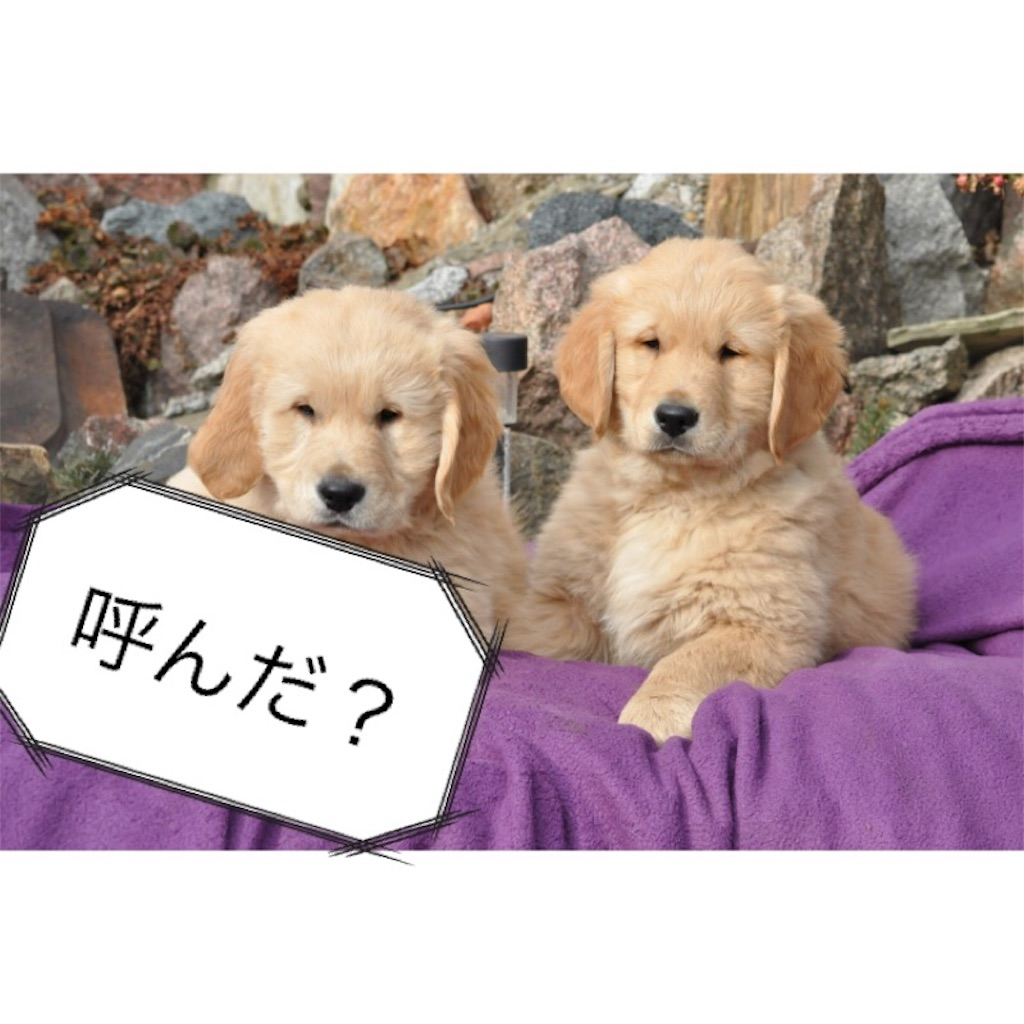 f:id:kakakamari:20180427205553j:image