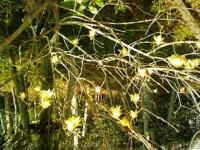 f:id:kakikakimom:20110302152014j:image