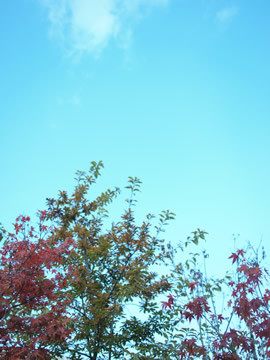 f:id:kalevala:20091122193845j:image