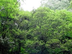 f:id:kalevala:20100612193214j:image:left
