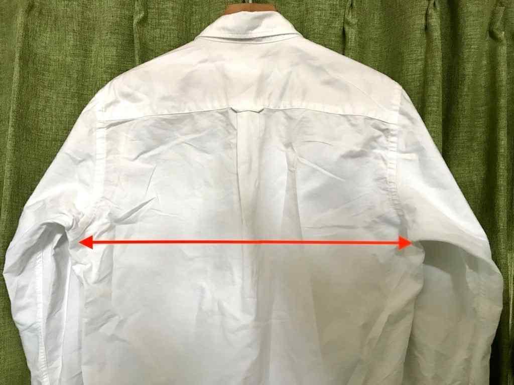 肩甲骨 サイズ
