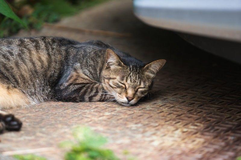 猫が道路で寝ている